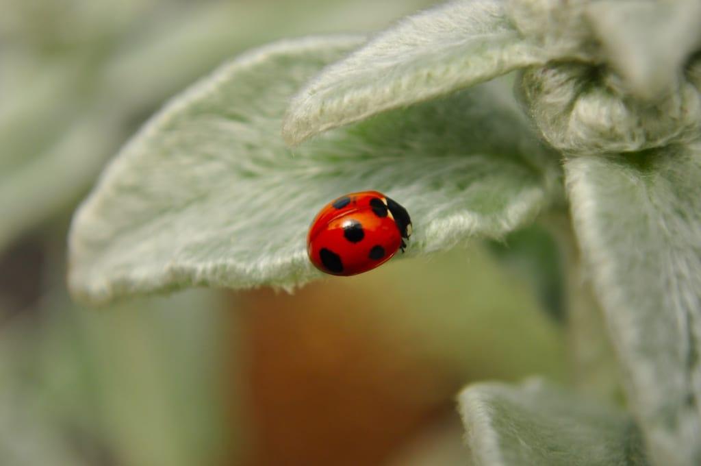 サーカスTCやパンダTCの虫対策について